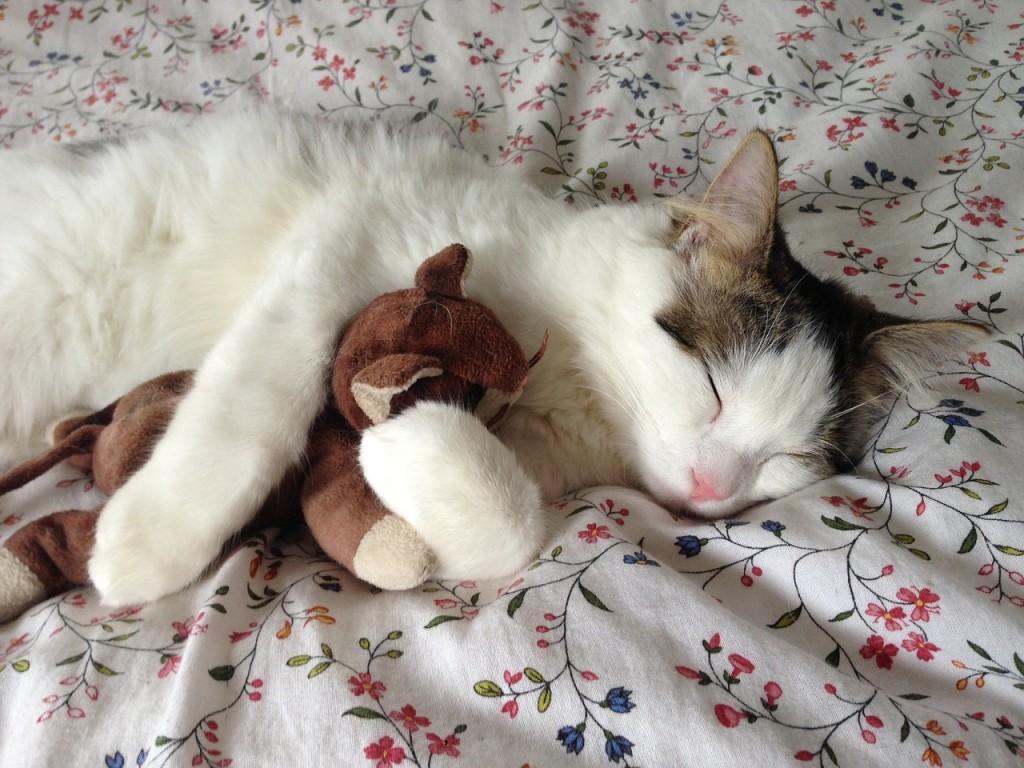 Cat hugging a teddy bear